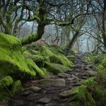Czyżby droga do chatki hobbita? Wielka Brytania (fot. James Mills / boredpanda.com)