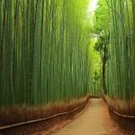 Las bambusowy, Japonia (fot. Yuya Horikawa / boredpanda.com)