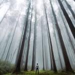 Wysokość tych drzew potrafi przyprawić o zawrót głowy, Mansfield, Australia (fot. Alex Wise)