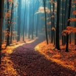 Ogniste barwy liści w morzu mgły (fot. Janek Sedlar / boredpanda.com)