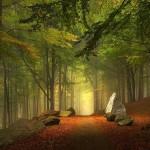 Leśna ścieżka, Niemcy (fot. Kilian Schönberger / boredpanda.com)